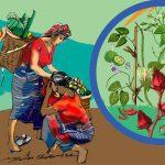 করোনায় কেমন যাচ্ছে আদিবাসীদের জীবন