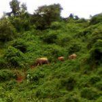 শেরপুর জেলার সীমান্ত এলাকায় শুরু হয়েছে হাতির উৎপাত