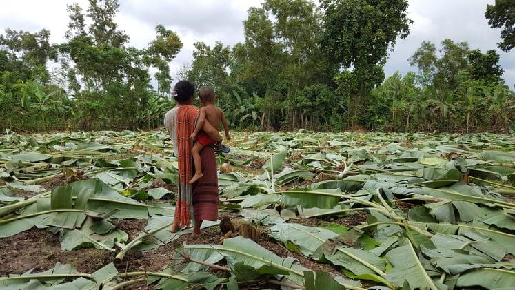 কর্তনকর্তনকৃত কলাবাগানে বাসন্তী রেমা